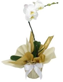Orquidea Elegance Branca (R$ 180,00)