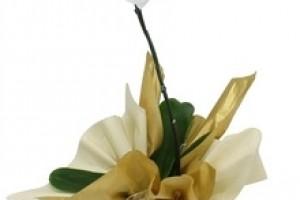 Orquidea Elegance Branca